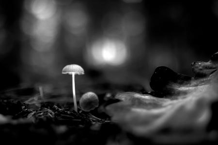 padnbg - Neem een kijkje in de wereld van de magische paddestoel - foto door gerhardvanderwiel op 27-10-2020 - deze foto bevat: macro, natuur, paddestoel, herfst, bos, tegenlicht, nederland, #bewerken#bewerking#bundel#cursus#foto#fotowedstrijd#lightro