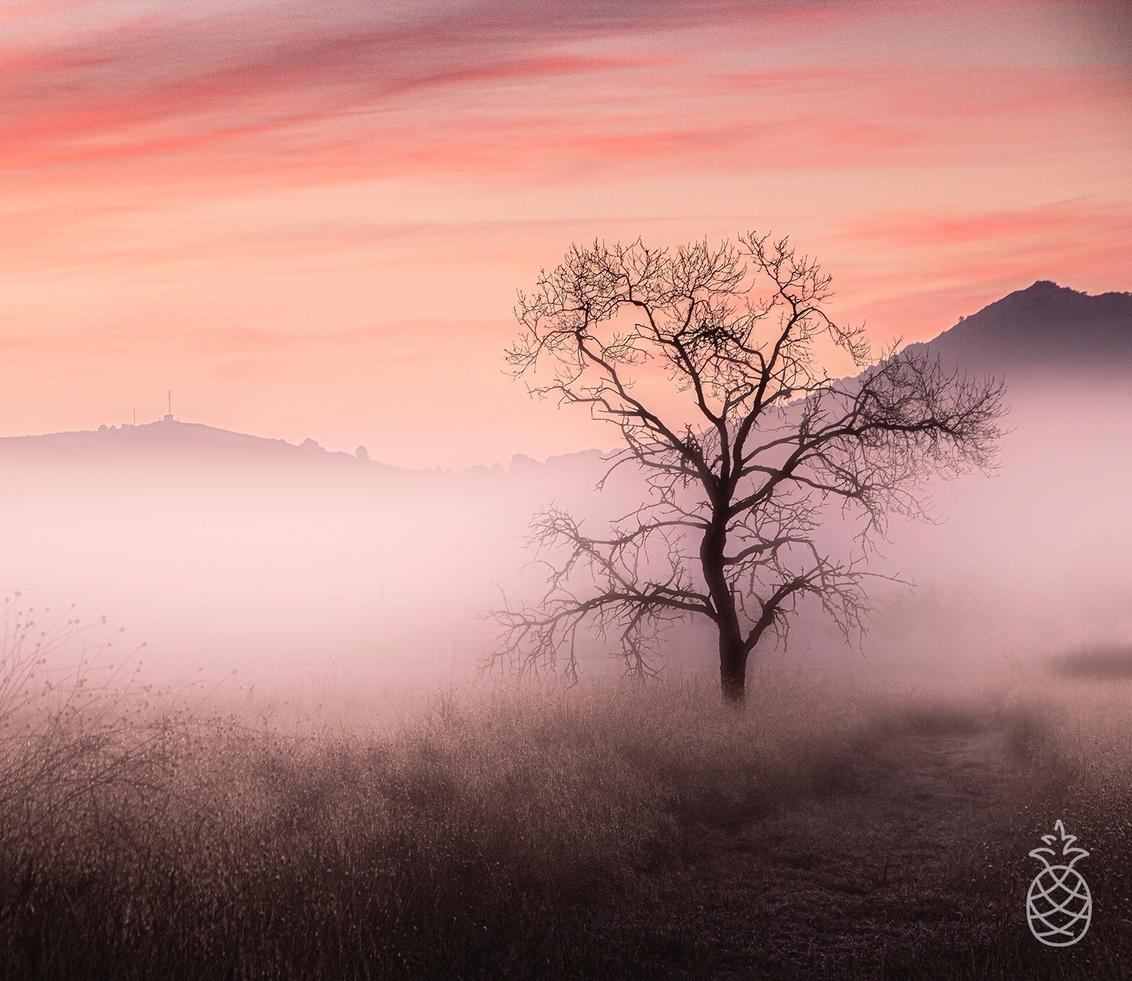 Low Visibility.... - Vorig week was het bijna elke ochtend genieten... Mist en prachtige kleuren. Hondon de los Frailes  Spanje. - foto door HenkPijnappels op 30-11-2020 - deze foto bevat: lucht, wolken, natuur, licht, herfst, zonsondergang, landschap, mist, tegenlicht, zonsopkomst, bomen, bergen, spanje