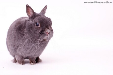 mijn konijn