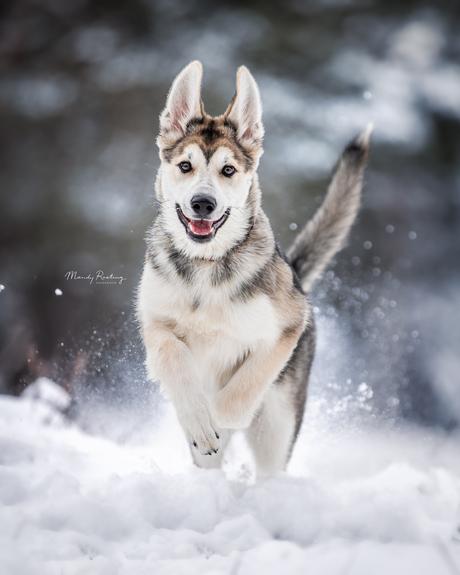 Nova in de sneeuw