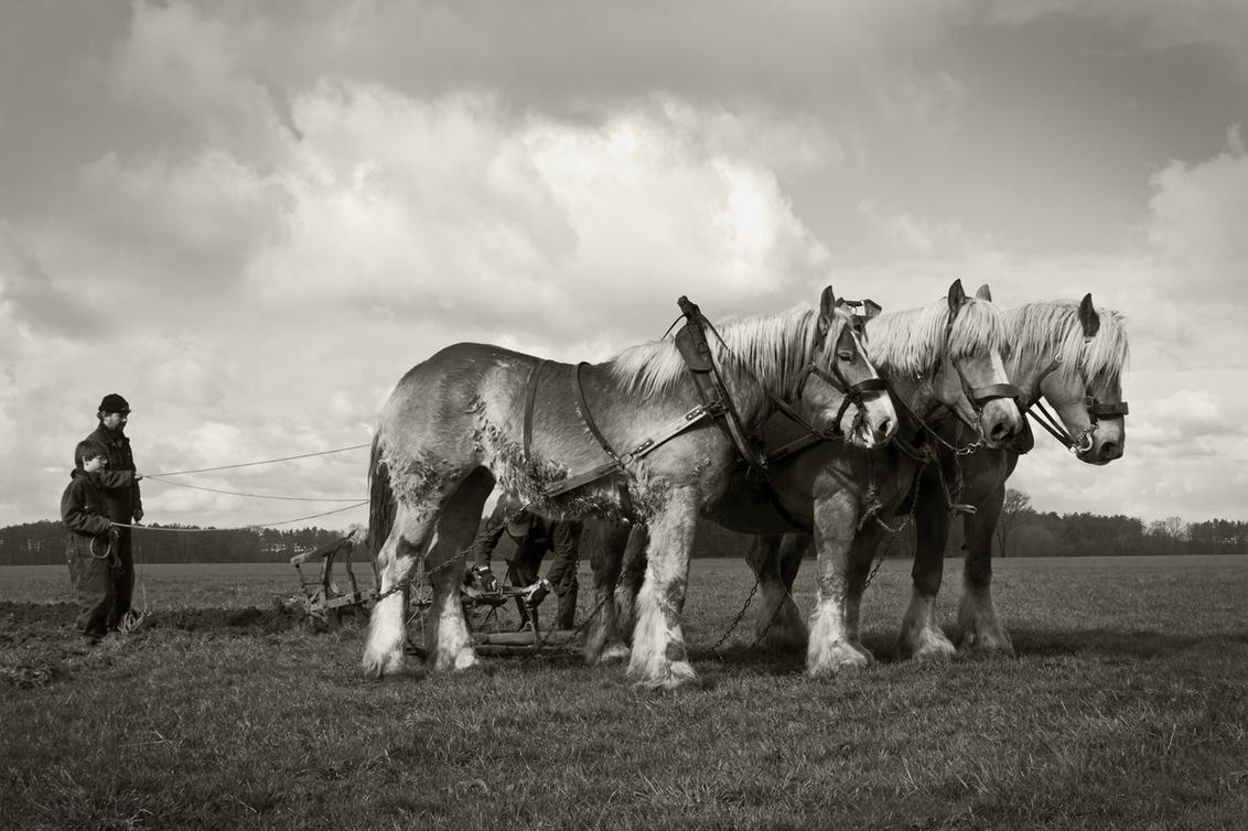 De boerenstiel 3 - Aan het einde van een vore gekomen wordt het pas echt technisch. De paarden moeten halthouden, een van de mannen draait het mes van de ploeg, omdat d - foto door kosmopol op 11-04-2012 - deze foto bevat: paarden, ploegen, span, kosmopol