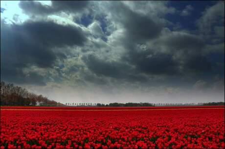 Tulpen Zon Regen