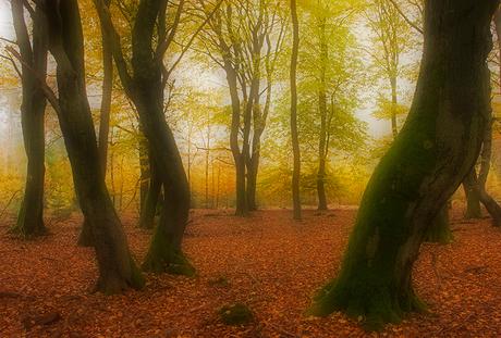 Trees merenque