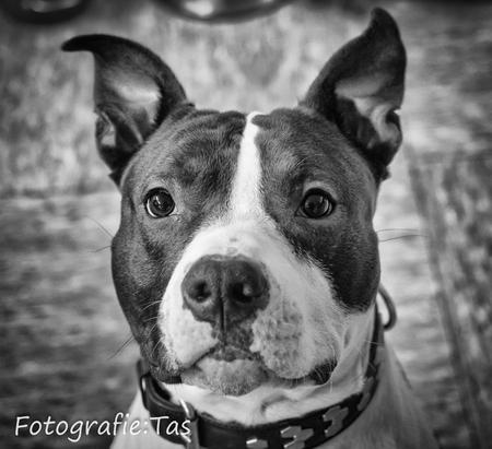 Zo trouw als een hond.... - - - foto door Taswor op 19-01-2018 - deze foto bevat: hond