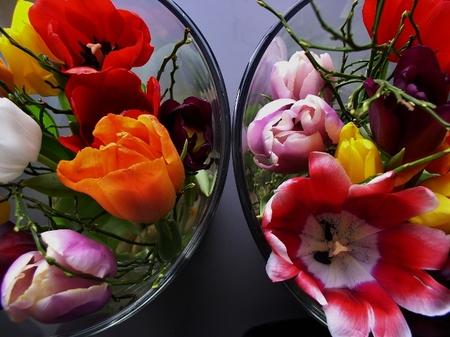 Tulpen - ntv - foto door ruud1950 op 15-01-2012 - deze foto bevat: tulpen