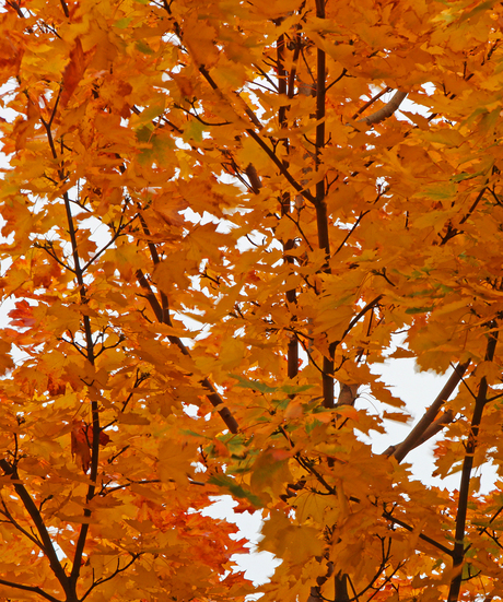 Autumn leaves part two