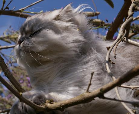 Lilo in de wind