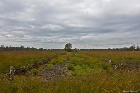 Veenlandschap - Hier wordt nog steeds turf gestoken. Dit is een veen landschap waar nog heel veel turf is te winnen. - foto door k.tien op 08-10-2011 - deze foto bevat: veenlandschap