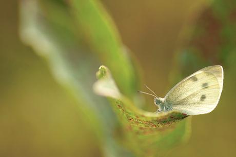 witje op blad