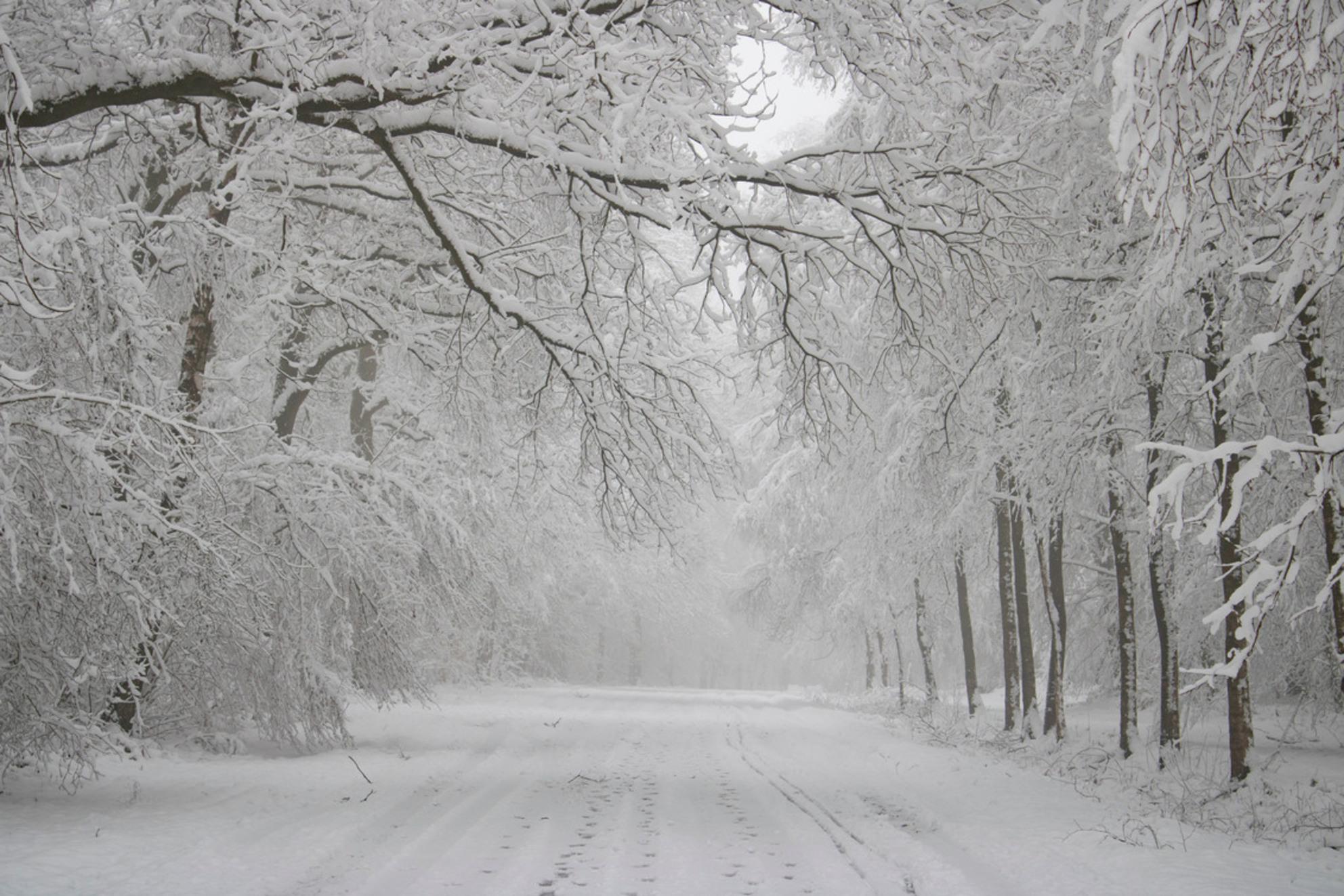 Winter Wonderland - Gistermorgen al heel vroeg naar het Vijlenerbos gegaan om de sneeuw te fotograferen. - foto door Carla34 op 26-01-2021 - deze foto bevat: boom, natuur, sneeuw, winter, landschap, bos, nederland, vijlen, vijlenerbos, zuid-limburg, vroege ochtend, winter wonderland - Deze foto mag gebruikt worden in een Zoom.nl publicatie