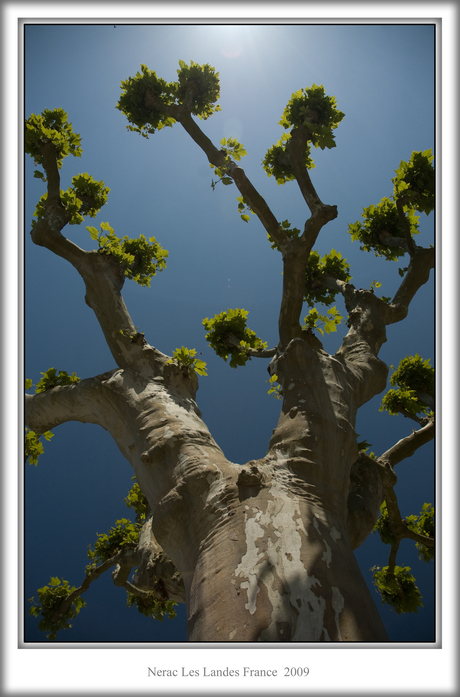 Mooie bomen