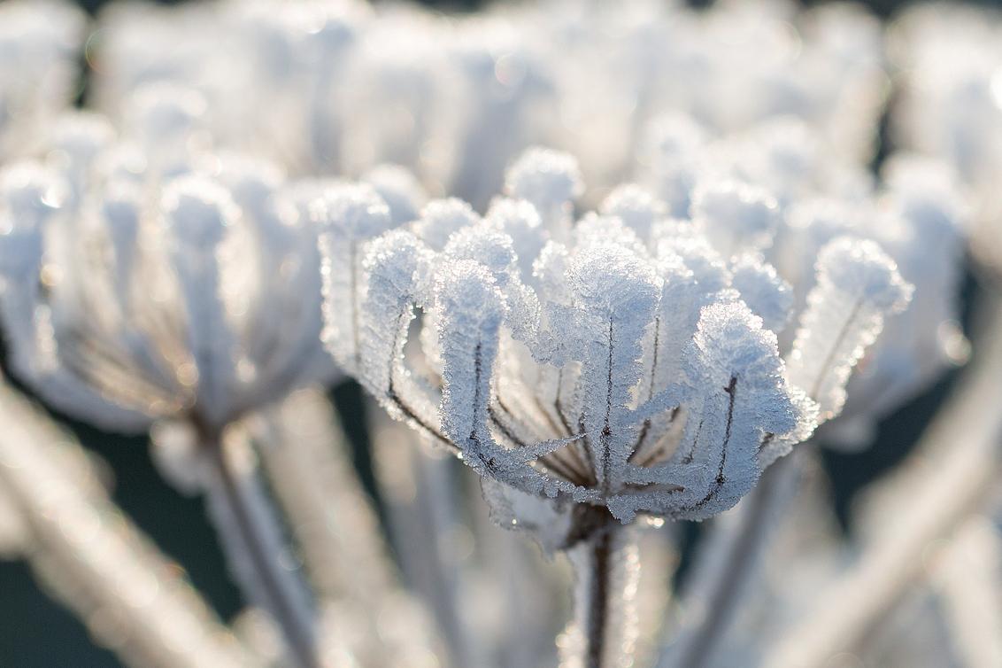 ijsbloemetje - Gisteren ,vandaag mist. - foto door annaseb op 31-12-2016 - deze foto bevat: bloem, ijs
