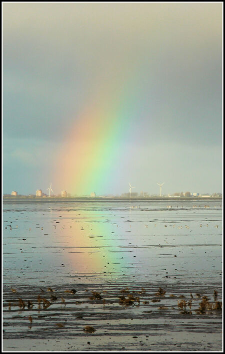 Balgzanddijk richting Den Helder - - - foto door jelle13 op 16-02-2021 - deze foto bevat: groen, lucht, zon, water, natuur, geel, licht, winter, landschap