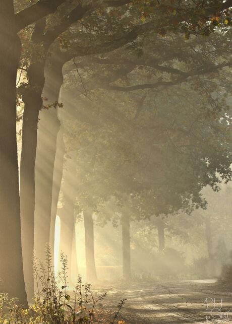 Zonneharpen in het Leenderbos