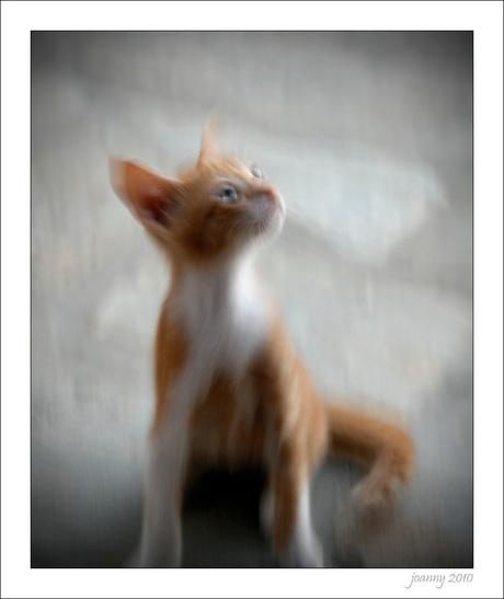 Kythera-15, crazy kitten