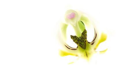 abstracte orchidee