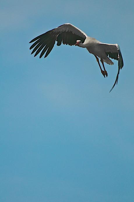 Flying high..