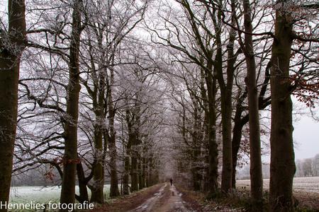 IMG_3661-1 - winter 2016 - foto door hennelies op 02-02-2016 - deze foto bevat: natuur, winter, bomen