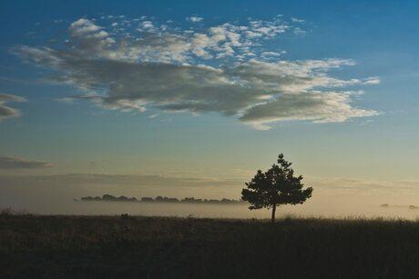Zonsopgang deelerwoud