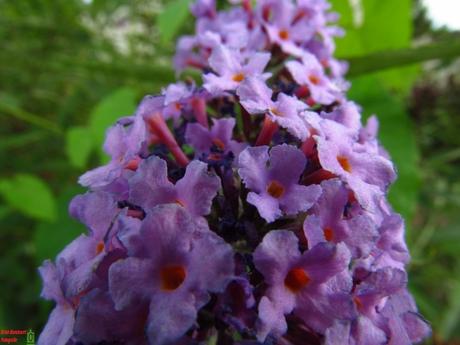 Bloemen Macro