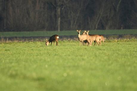 Polders in Brabant