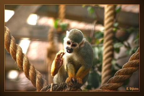 voor aap..