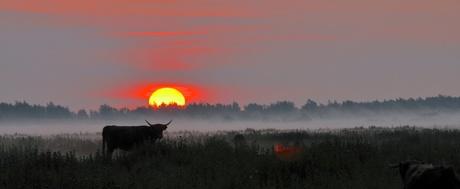 Lauwersmeergebied in wake_DSC6604.JPG