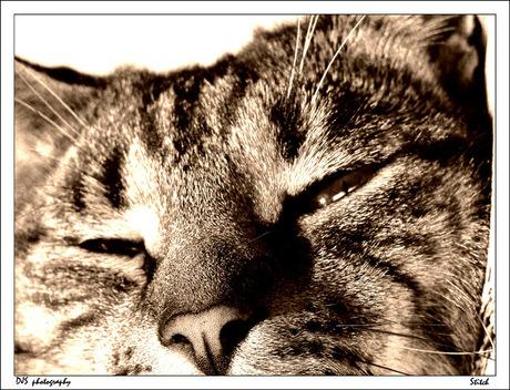 Stitch the Cat