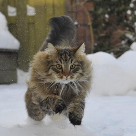 brrrrr sneeuw....