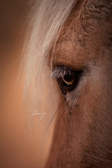 Romantische paardenfotografie - close up oog