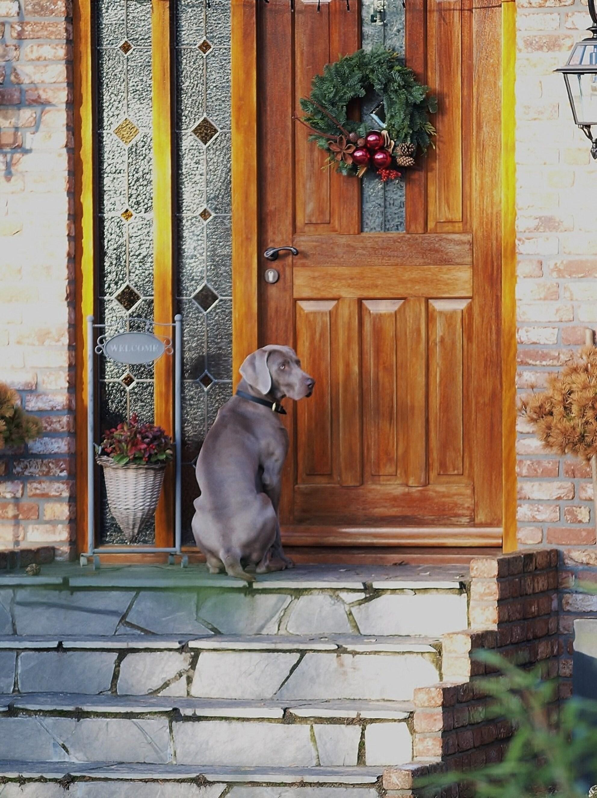 Anybody home?? - - - foto door Annemimieke op 06-01-2010 - deze foto bevat: hond, deur, funny - Deze foto mag gebruikt worden in een Zoom.nl publicatie