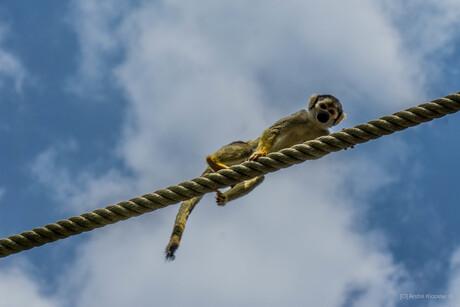 05783 curious deadhead monkey