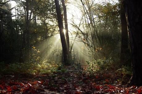 Ochtendzonnetje in het bos