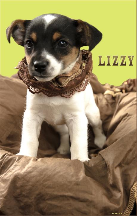 Lizzy - 1