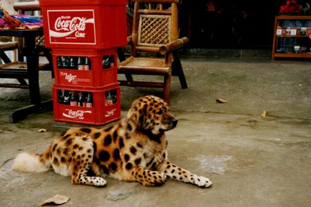What's happend? - Gezien in Indonesie. - foto door w.zijlstra10 op 20-01-2011 - deze foto bevat: dog, tijger, kruising