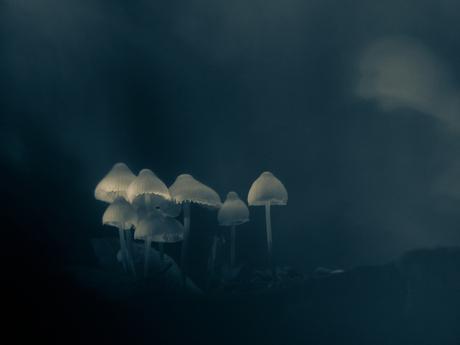 Into the dark woods...