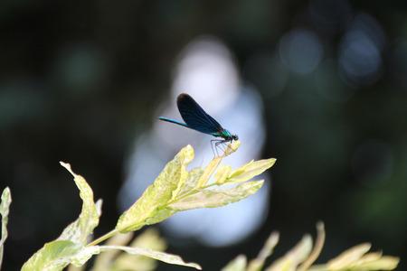 Juffer 2 - - - foto door Fotowgr op 29-07-2018 - deze foto bevat: insect