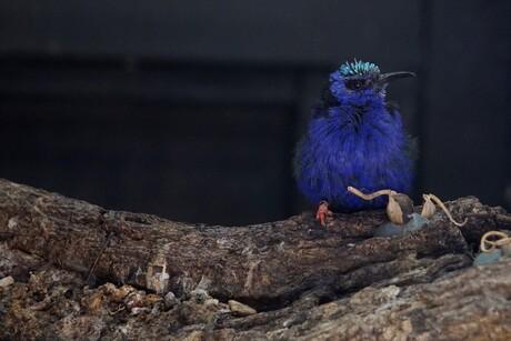 Mooi vogeltje.