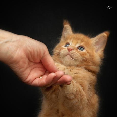 Please give me a hug