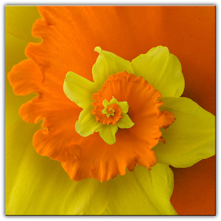 Flower -remake- - - - foto door patrickhhoff op 13-11-2007 - deze foto bevat: flower, droste, remake, spiral