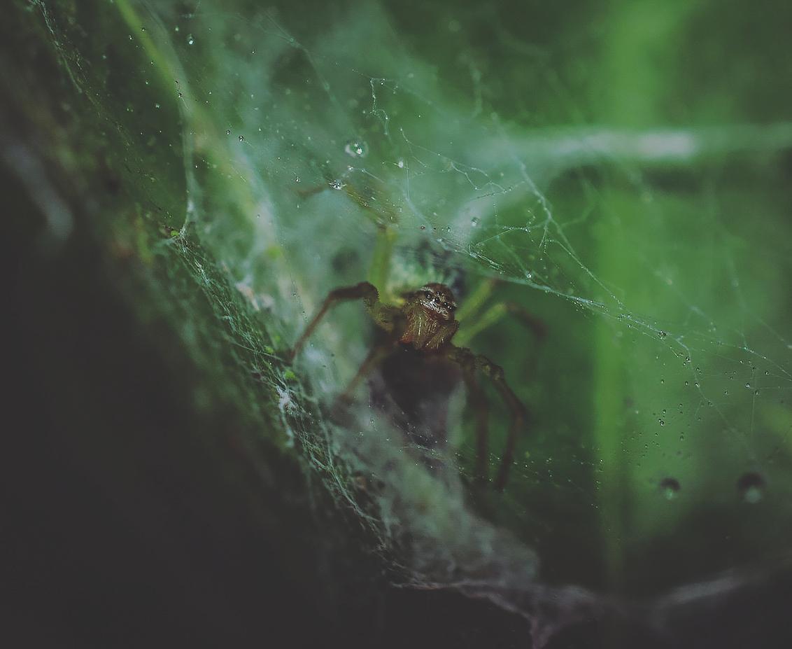 kriebel, krabbel, kruisje - Thanks voor jullie reacties, stemmen en favos op vorige upload zoomvrienden. Blijf gezond en veilig maar, geniet wel - foto door Jodokuscul op 26-01-2021 - deze foto bevat: spin, druppel, dof, bokeh