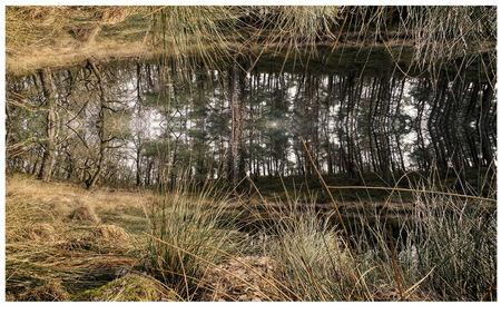 reflectie in een heidevennetje - Reflectie in een heidevennetje op de Loenermark - foto door RobZuydervelt op 03-03-2021 - deze foto bevat: natuur, landschap, bewerking, paint shop pro