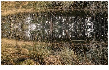 reflectie in een heidevennetje