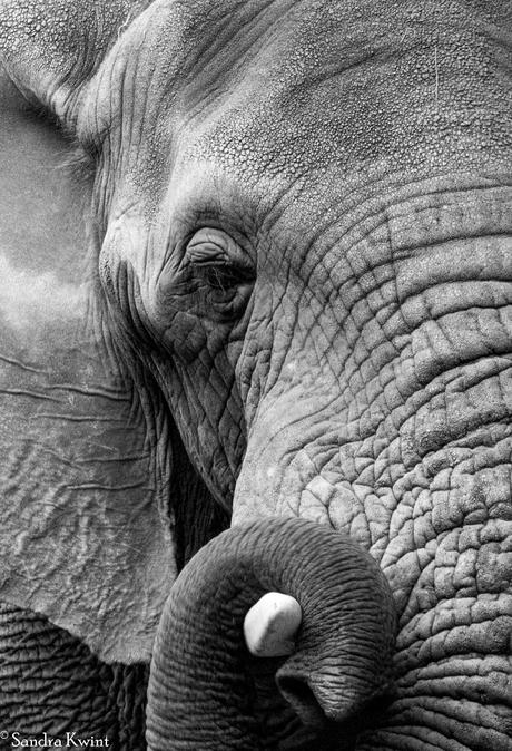 Gentle Giant - Zuid Afrika