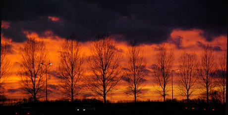 Bomen in vuur en vlam