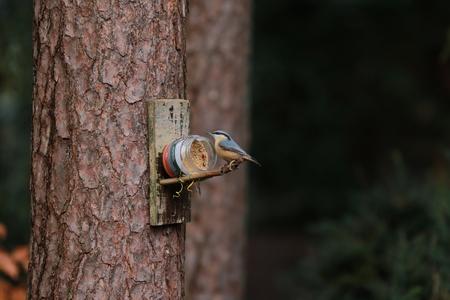 Bird in Forest Garden - Bird eating peanutbutter, Emmen - foto door VosL op 17-02-2018