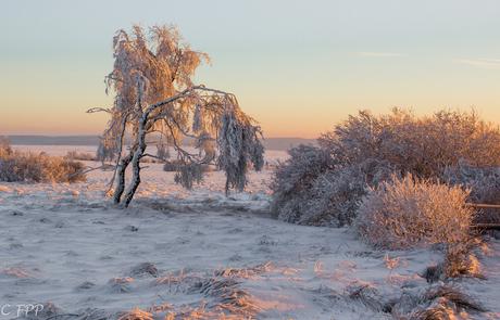 Winter , ochtendgloed