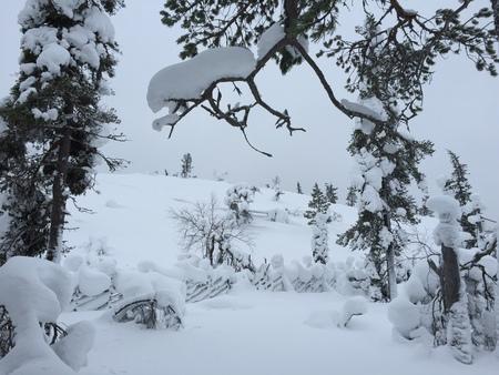 50 shades of (Snow)White - 50 shades of (Snow)White in WinterWonderland... - foto door NanaB op 30-11-2015
