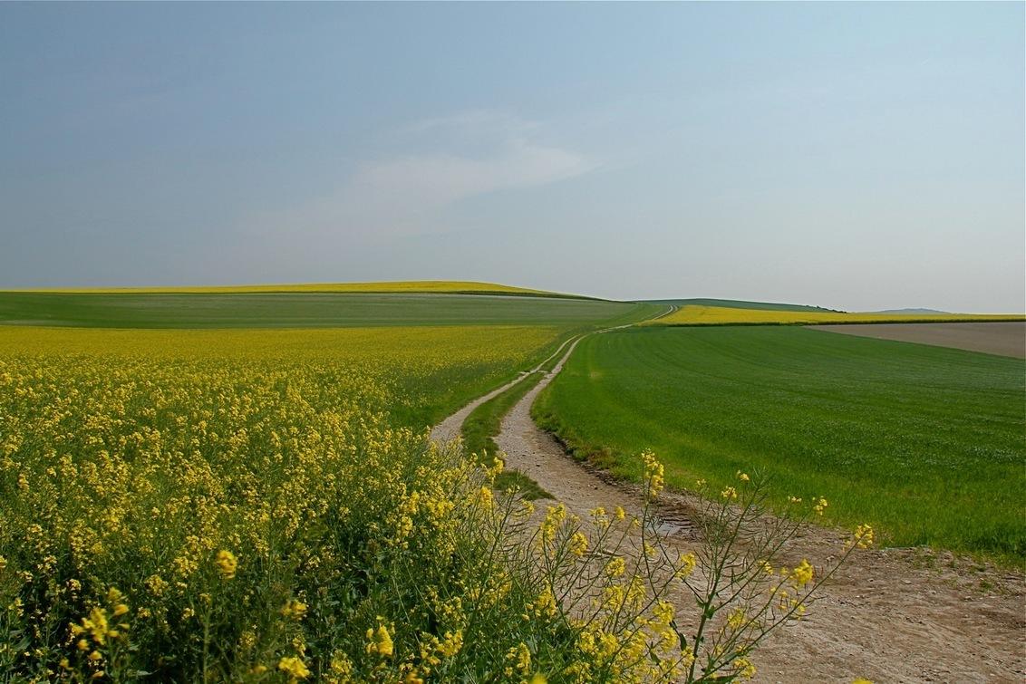 koolzaad - in nord pas de Calais. - foto door album-toscakramer op 11-05-2011 - deze foto bevat: geel, frankrijk, voorjaar, canon, koolzaad, kust, nordpas de Calais
