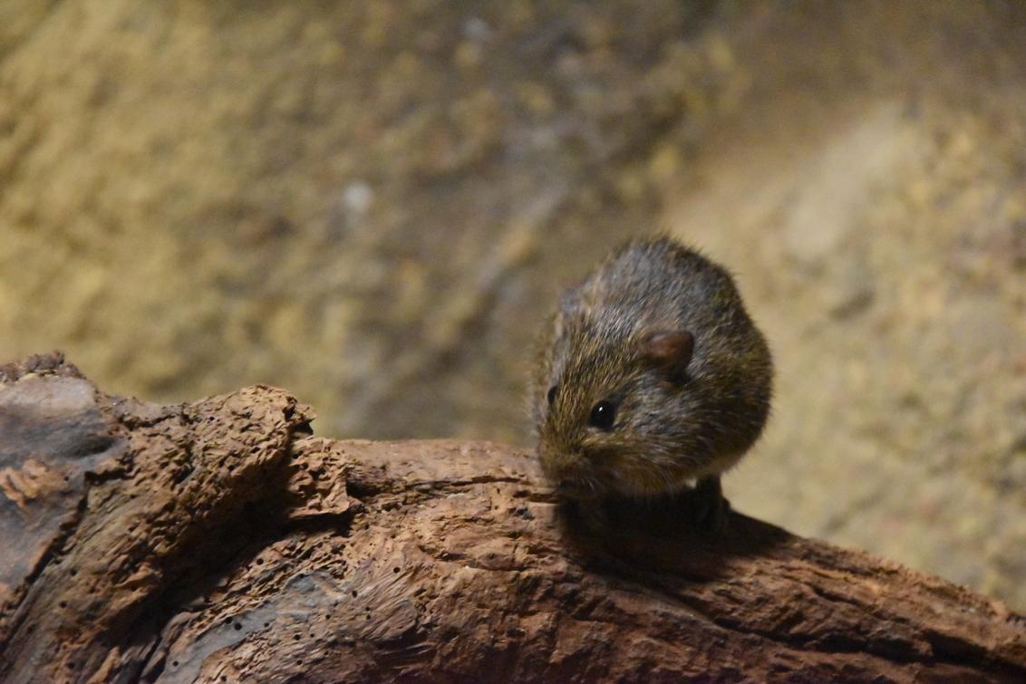 muis - Ik zie jou ook wel. - foto door josebatterink op 21-10-2016 - deze foto bevat: natuur, dieren, muis